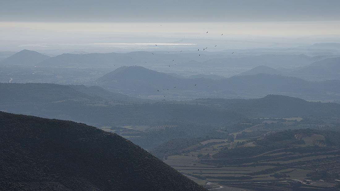 Paisaje de un gran valle brumoso y pájaros volando