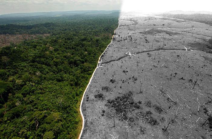 Deforestación sin medidas